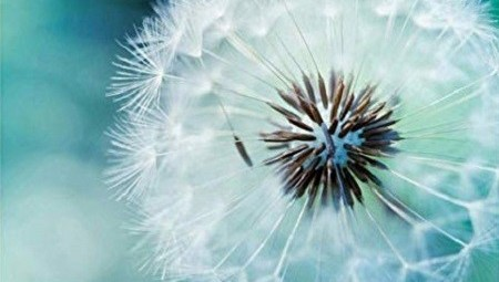 Haptonomie marit maas wijchen nijmegen haptotherapie